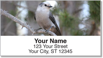 Gray Jay Bird Address Labels