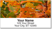 Autumn Brilliance Address Labels