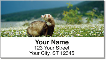 Ferret Address Labels