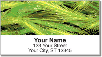 Tree Close Up Address Labels