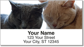 Cat Nap Address Labels