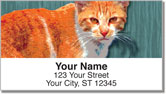 Alley Cat Address Labels