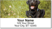 Black Lab Address Labels