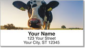 Dairy Cow Address Labels