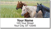 Madaras Horses Address Labels
