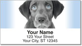 Black Lab Pup Address Labels