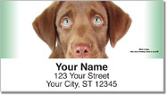 Chocolate Lab Pup Address Labels