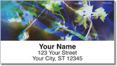 Bacca Tree Address Labels