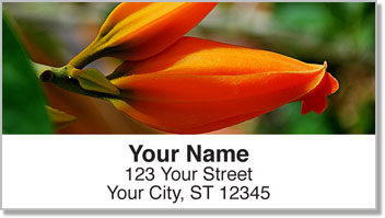 Orange Flower Address Labels