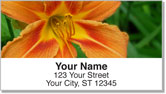 Lily Address Labels