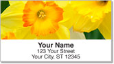 Golden Daffodil Address Labels