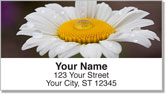 Gerber Daisy Address Labels