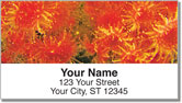 Coral Reef Address Labels