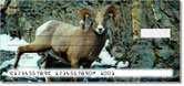 Big Horn Sheep Checks