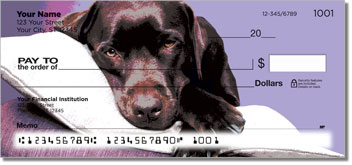 Dog Portrait Checks