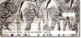 Kay Smith Zebra Checks