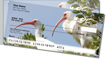 White Ibis Side Tear Checks