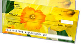 Golden Daffodil Side Tear Checks